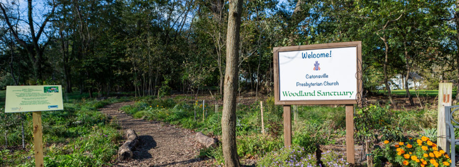 "A sign that says, ""Welcome to the Woodland Sanctuary"" next to a path leading into the woods"