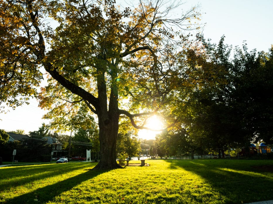 The sun shining through a large tree on the church's front lawn